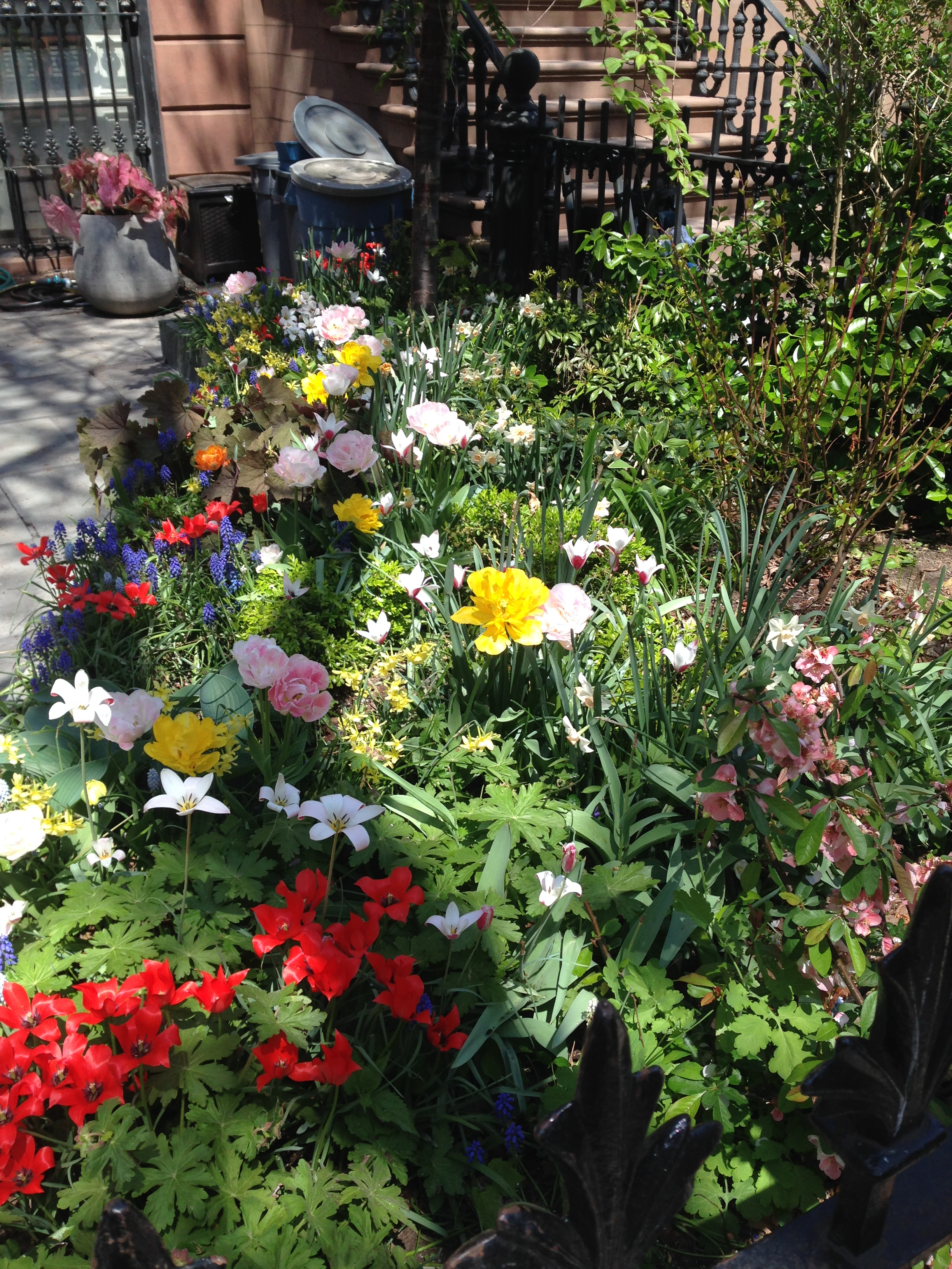 tulips and blossoms bursting from their seams manhattan and